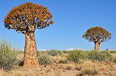 Quiver Tree