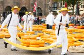 Carriers walking with many cheeses in the famous Dutch cheese market in Alkmaar