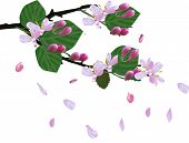 illustration with spring blossoming branch and falling petals isolated on white background