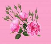 illustration with roses isolated on pink background