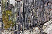 Rotten Wooden Board