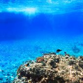 image of shoal fish  - Coral reef of Red Sea with tropical fishes - JPG
