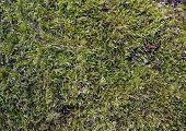 Fluffy Green Moss