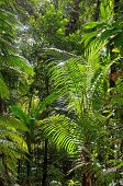Tropical rainforest with plants