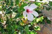 foto of oleander  - Pink The Oleander Flower Background Textures pastel - JPG