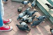 a man feed pigeons on the street
