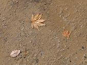foto of sand gravel  - autumn leaves on a wet dirt road from sand and gravel - JPG
