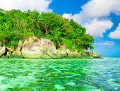 Jungle Dream Palms