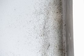 foto of spores  - A wall with harmful spreading black mold - JPG