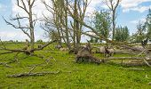 stock photo of herd horses  - Herd of konik horses in nature in spring - JPG