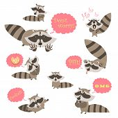 picture of raccoon  - Collection of funny raccoons - JPG