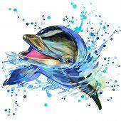 stock photo of dolphin  - Dolphin T - JPG