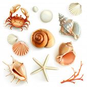 stock photo of pearl-oyster  - Seashells - JPG