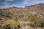 foto of pipe organ  - Organ Pipe Cactus National Monument is a U - JPG