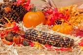 Autumn Theme With Corn