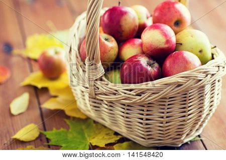 gardening, season, autumn and fruits concept - close up of wicker basket with ripe red apples and le