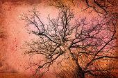 ramas de los árboles antigua