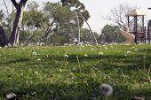 Dandelionplayground