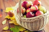 gardening, season, autumn and fruits concept - close up of wicker basket with ripe red apples and le poster