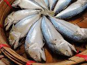 Cavala fishs