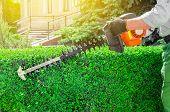 Garden Gasoline Scissors, Trimming Green Bush, Hedge. Working In The Garden. poster