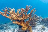 Coral Reef In Carbiiean Sea Off Coast Of Bonaire poster
