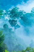 slow floating fog blowing cover on the top of mountain look like as a sea of mist. In the morning th poster
