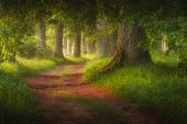 Magic Fairy Tale Forest And Forest Path Leading Trough It poster