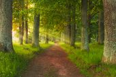 Beautiful Green Fairy Tale Forest And Forest Path Leading Trough The Forest poster