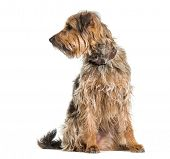 Mixed-breed dog looking away against white background poster