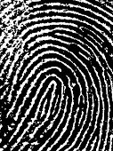 Close crop of a Fingerprint - Very accurately scanned and traced ( Vector is transparent so it can b