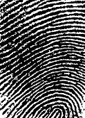Black and White Vector Fingerprint Crop - Very accurately scanned and traced ( Vector is transparent