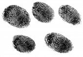 5 Black and White Vector Fingerprints - Very accurately scanned and traced ( Vector is transparent s