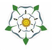 White Rose Of Yorkshire