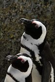 Two Pinguins standing next to each other