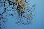 Tree Branches With Sky On Background poster