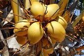 Zanzibar, Nungwi: Coconut