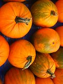 group of orange pumpkins