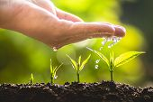 Plant A Tree Growing Tree Care Tree And Hands Watering Trees In Nature poster