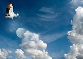 stock photo of risque  - Stork landing on the moon in a cloudy sky - JPG