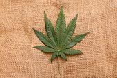 Marijuana Leaf. Marijuana leaf on a Burlap Bag. Backgrounds and Textures poster