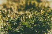 Oland; Nature; Wildlife; Spring; Summer; Weather; Park; Meadow;  Garden; Plant; Botany; Flora; Sunsh poster