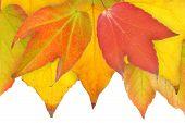 Hojas en otoño.