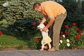Father teaches her beautiful little daughter to walk on the background of rose bushes