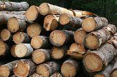 Logging - Close View