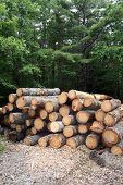 Logging - Wide Shot
