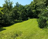 Green Hill Or Slope With Grass And Trees poster