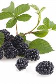 Wonderful Blackberries.