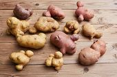 Trendy Ugly Potatoes On A Wooden Rustic Background. Ugly Vegetables Concept. poster