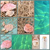 Sea shells and ocean collage